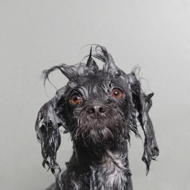 Feel Your Heart Melt Into Bubble Bath At A Wet Dog Photo Series