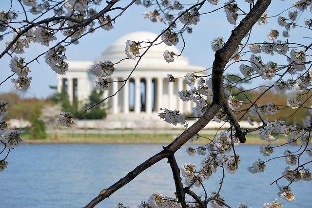 Thomas Jefferson Memorial II  Tidal Basin 2011