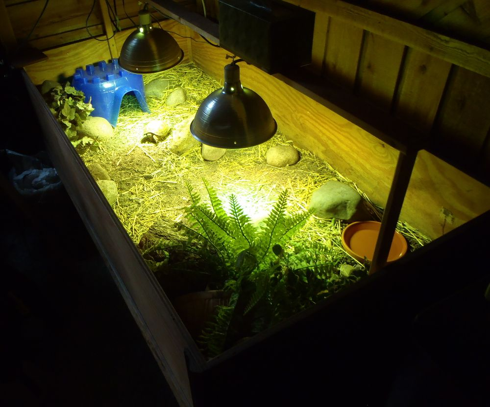 Another one of our indoor russian tortoise pens plastic hide is