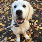 Puppy in Autumn