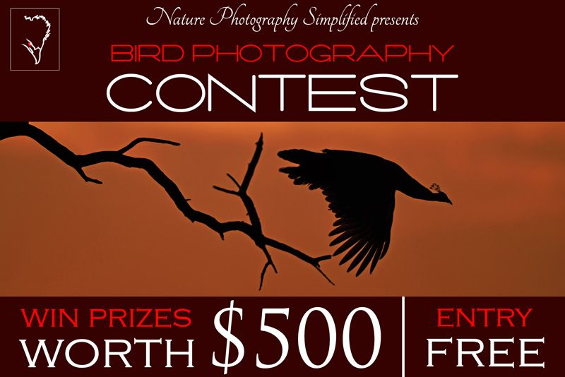 Free Bird Photography Contest 2015 Bird Photography Photography Contests Wildlife Photography