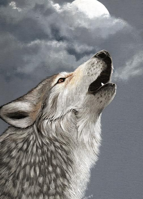 """Gray Wolf Howling Drawing """"Moonlight Magnet..."""