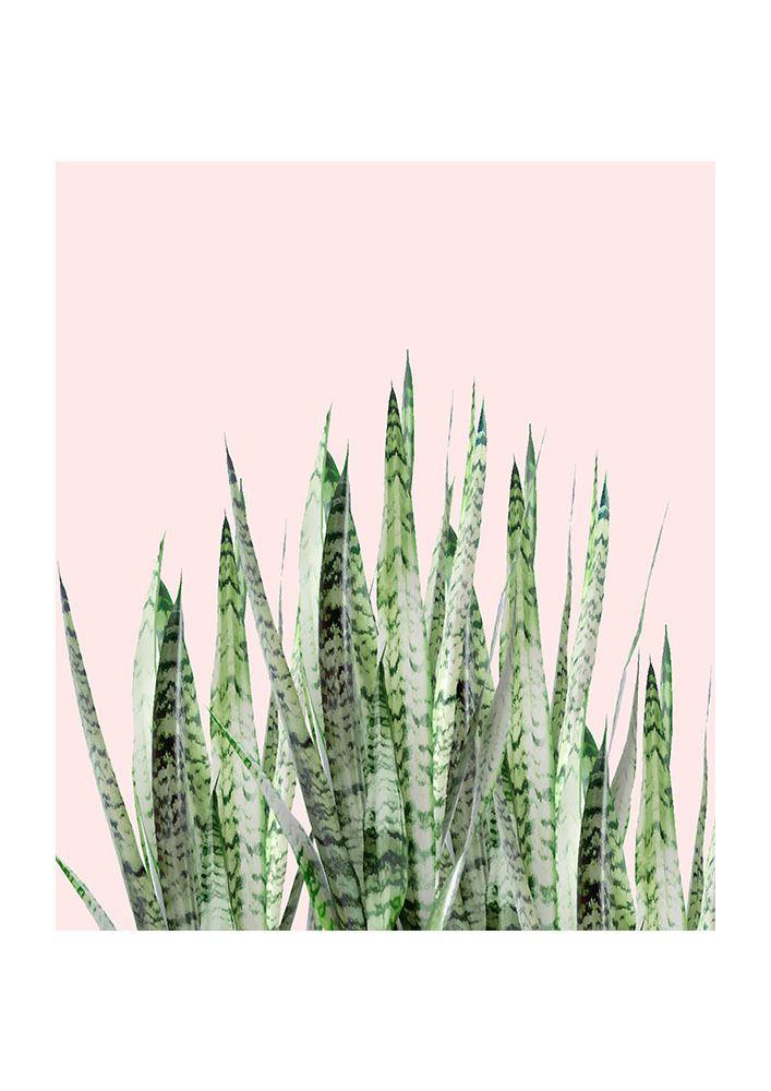 East End Prints - Botanical Balance, £19.95 (http://www.eastendprints.co.uk/products/botanical-balance.html)