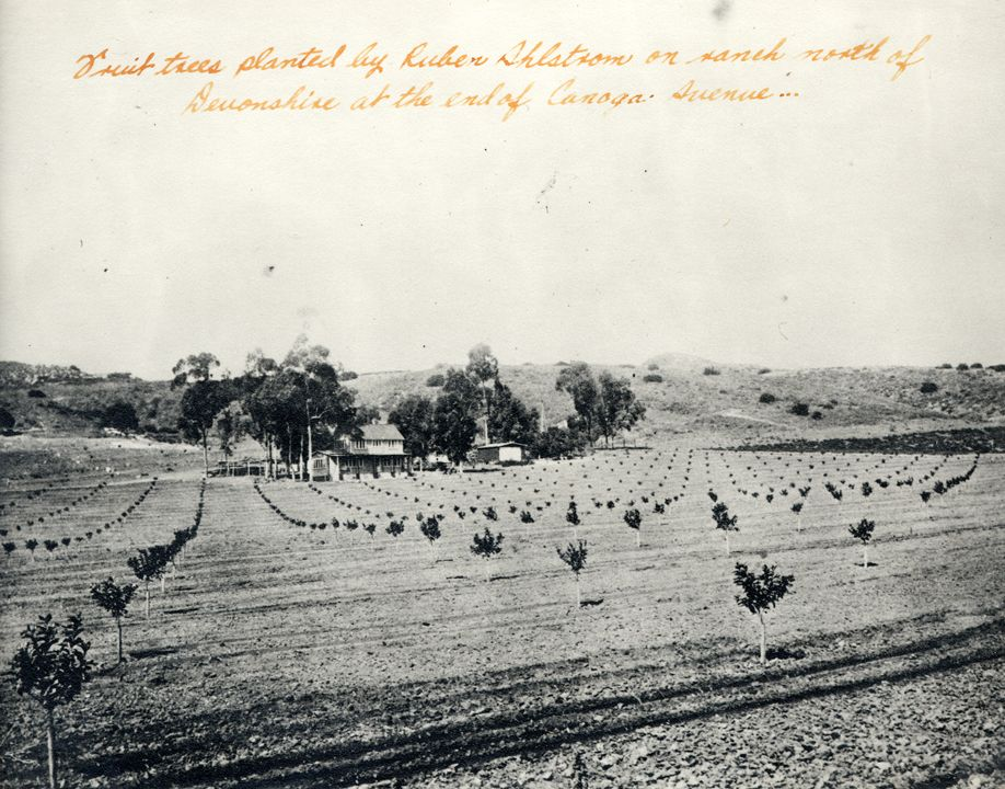 Fruit Trees Planted By Ruben Ahlstrom On Ranch North Of Devonshire At The End Of Canoga Avenue Chat California History San Fernando Valley Los Angeles History