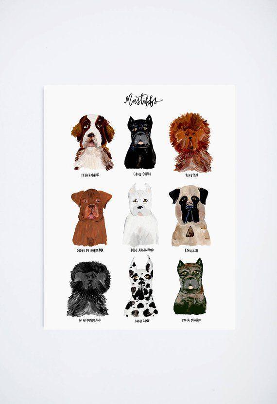 Mastiff Dog Chart Dogs Pet Portrait Art Print 11 X 14