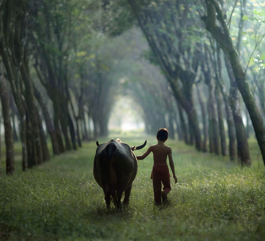 asit, Going Home