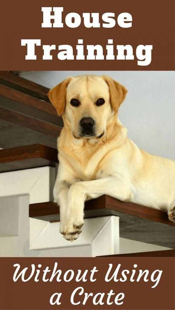 Effective Aspired Dog Training For Obedience Resources Dog