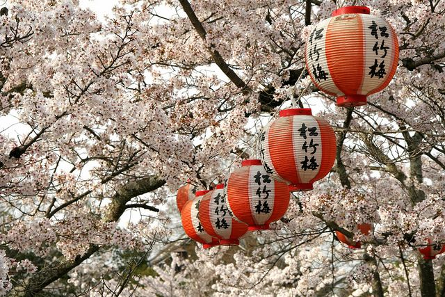 Best Places To See Cherry Blossoms In Japan Cherry Blossom Japan