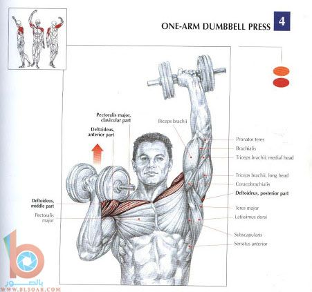 صور تمارين عضلات الظهر والكتفين