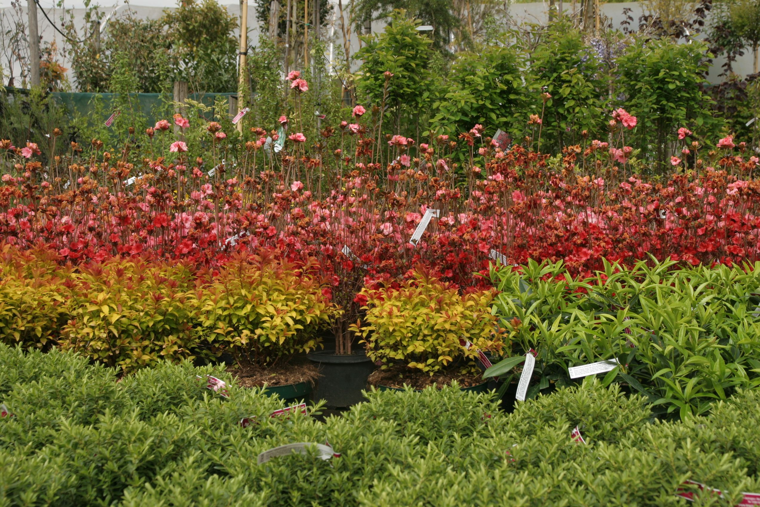 Big Plant Nursery in Ashington, West Sussex Plants, Big