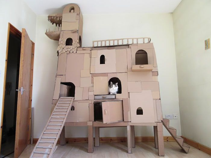 Man Builds Dragon Shaped Cardboard House For His Cat   We Love Cats And  Kittens