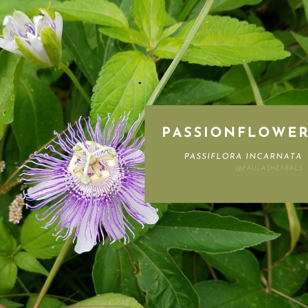 How To Make Passion Flower Tea Passion Flower Tea Flower Tea Passion Flower