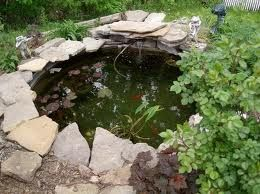 I love garden ponds! I need to figure out how to keep the raccoon out of mine