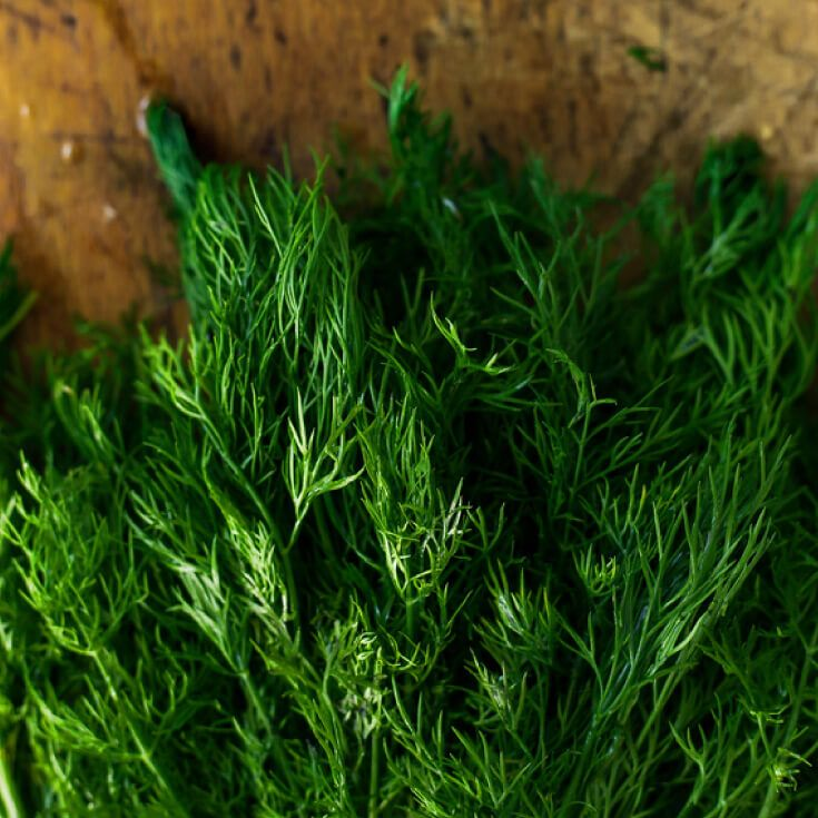 8 Surprising Dill Weed Benefits (