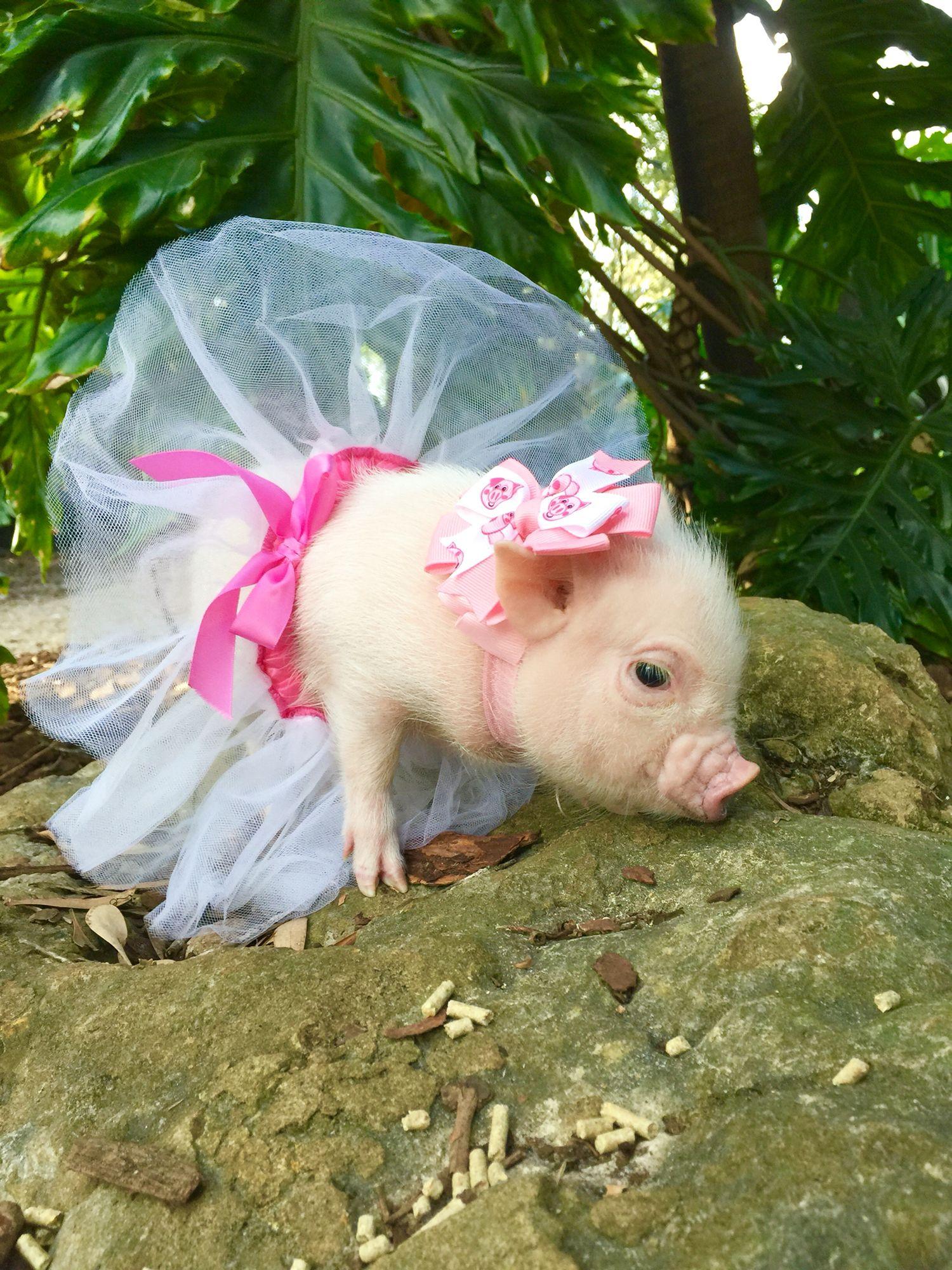 www.oinkoinkminipigs.com | EARTH | animals | Pinterest ...