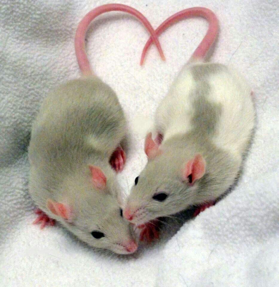 это, картинки о любви мышки том, как самостоятельно