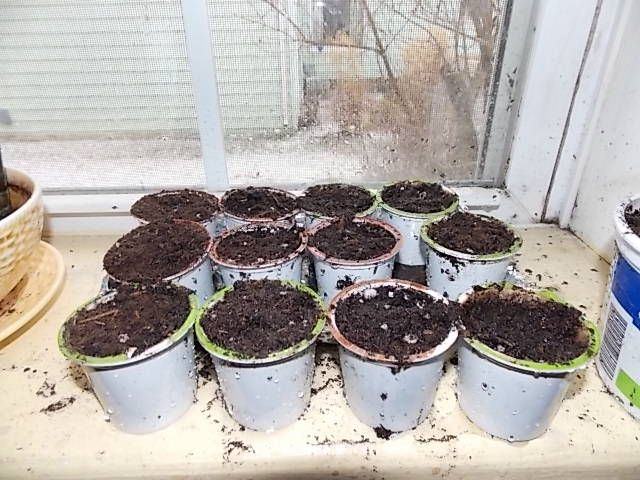 Keurig cup seed starters.. I used this.. works fine for things that don't need to be started for long.. not so good for veggies that need to grow up before going in the ground.