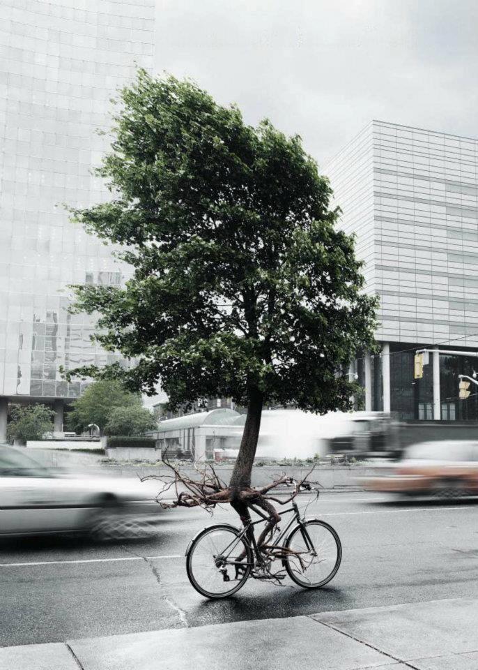 #Magic #Tree #Bike