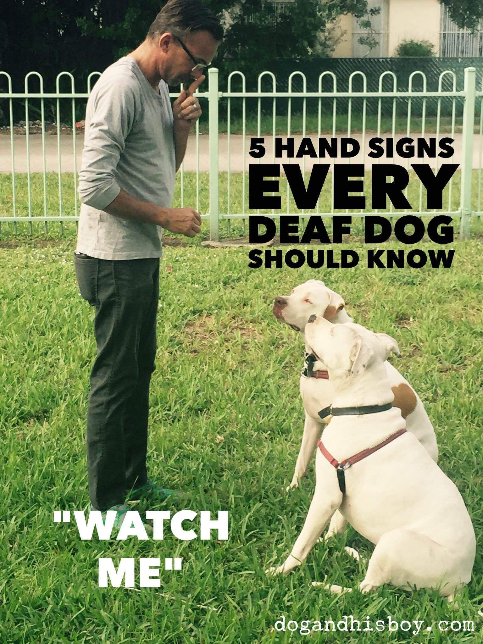 5 Hand Sign Every Deafdog Should Know Edisonthedeafdog Deaf