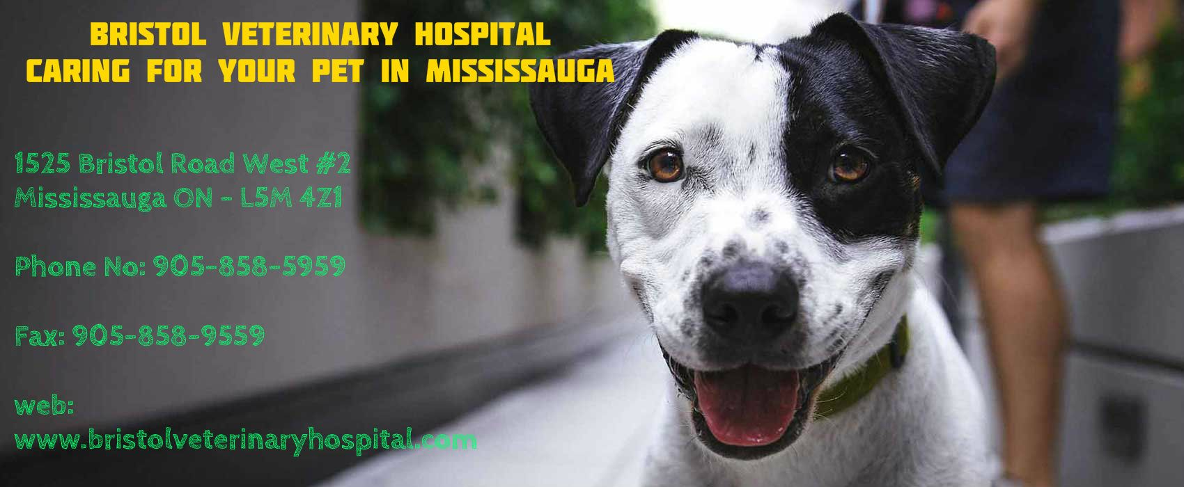 We Are The Best Animal Care Hospital In Mississauga We Provide 24 7 Emergency Medical Checkup Dental Care Diagnosis Care Hospital Veterinary Services Medical Pictures