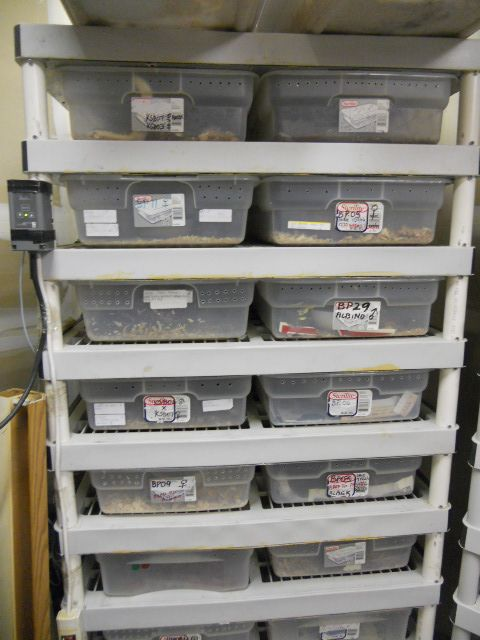 Homemade Snake Rack System With Belly Heat And Johnson Control Stat Reptile Room Snake Cages Reptile Rack
