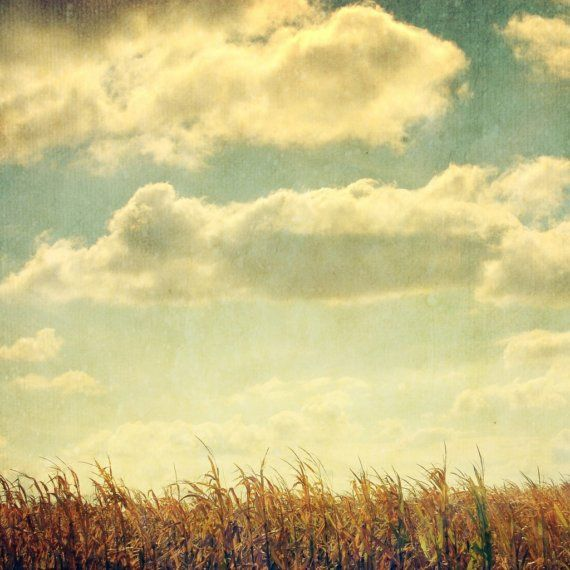 BUY 2 GET 1 FREE Nature Photography, Corn Field Decor, Vintage ...