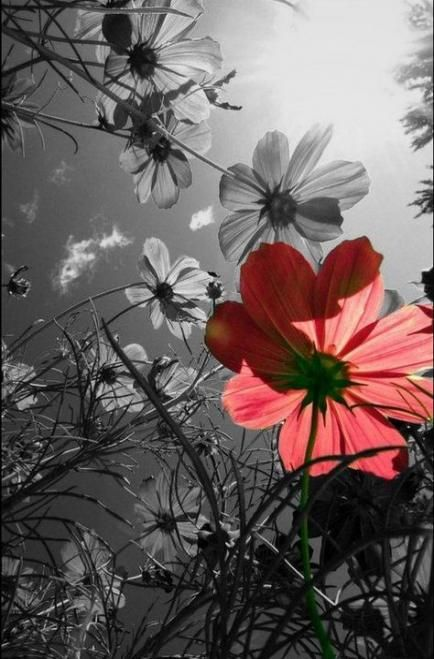 22 Ideas Flowers Black And White Photography Color Splash