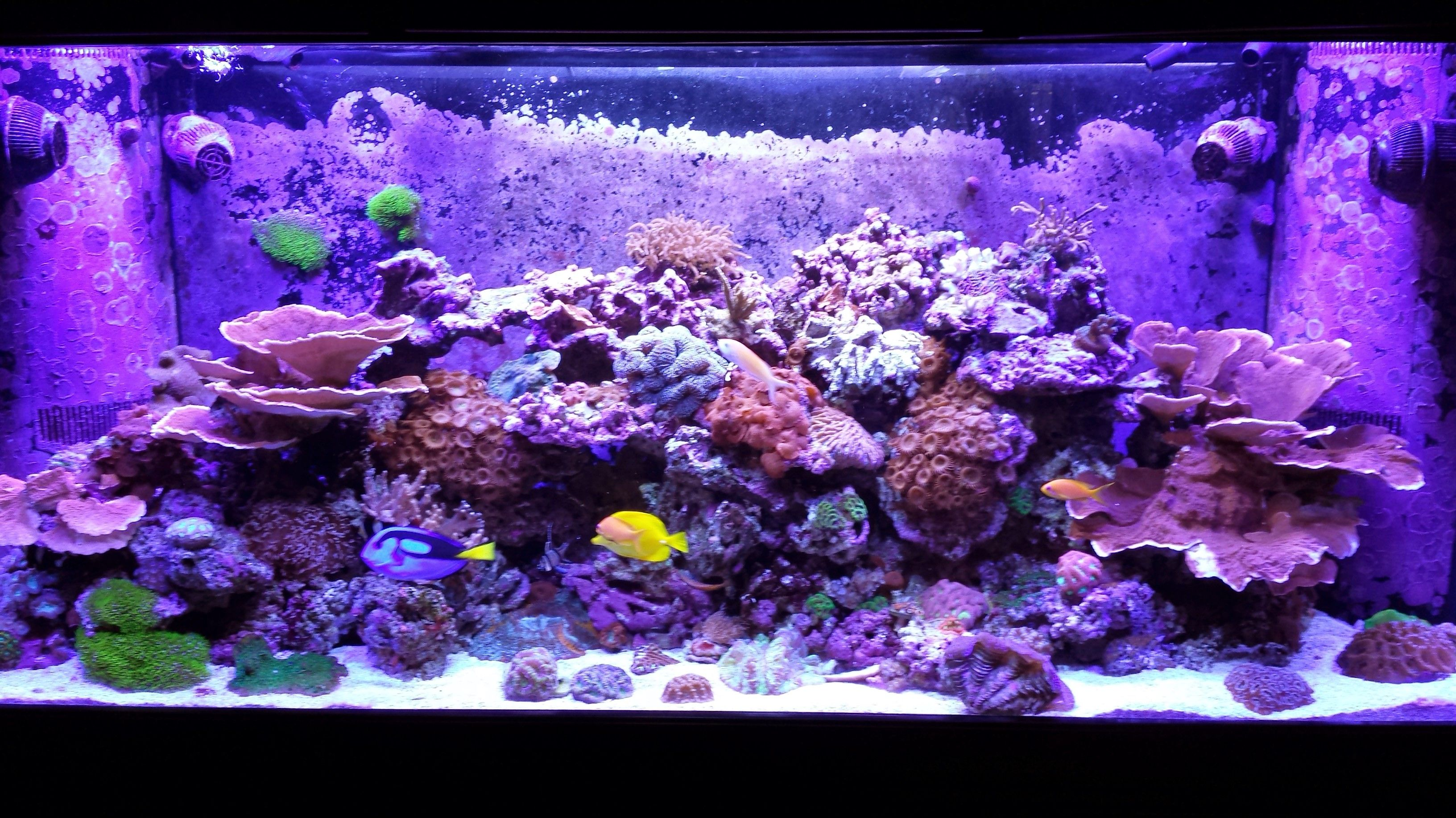 Craigslist #Fish #Tank for Sale | Aquarium Shops Lake Worth