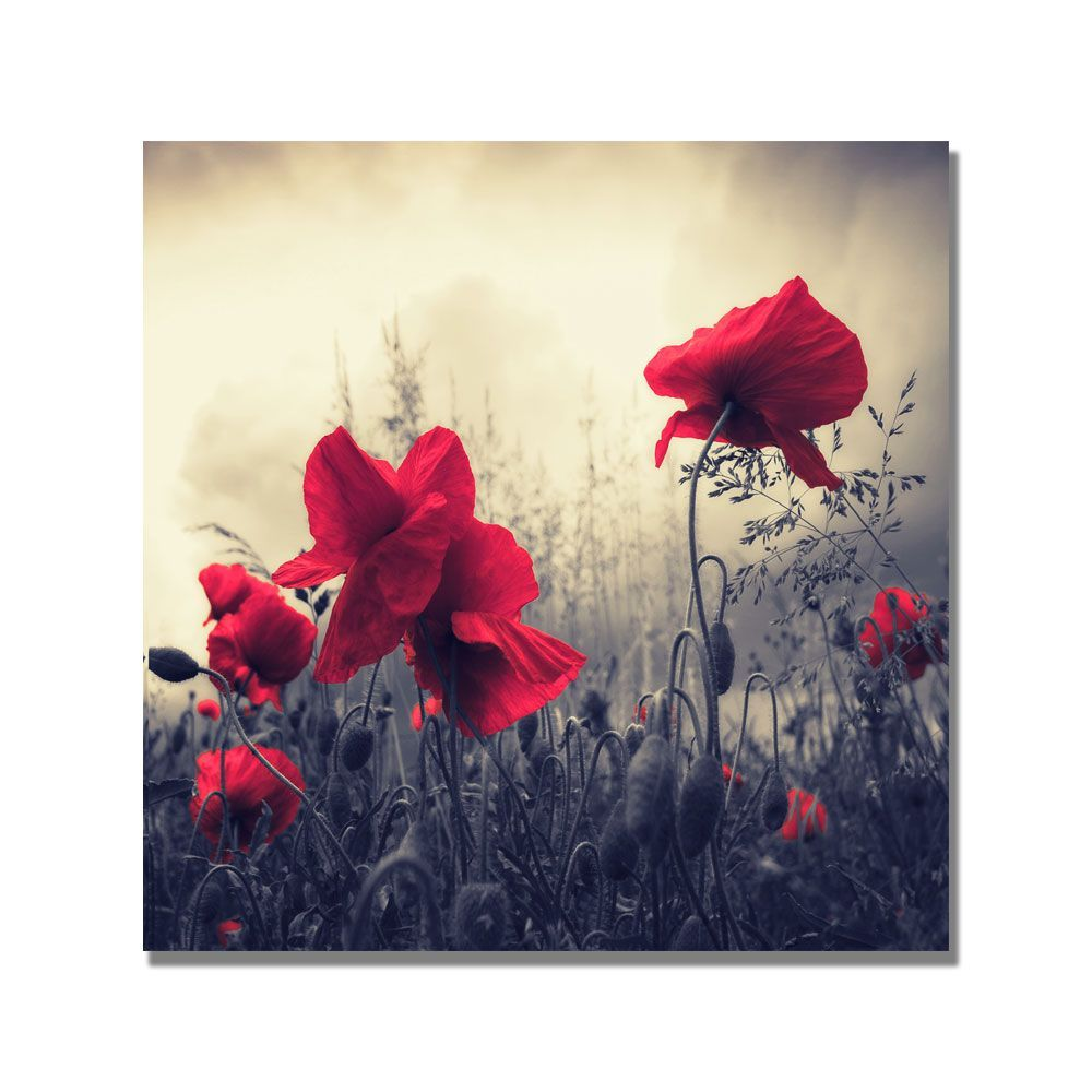 Trademark Fine Art Philippe Sainte-Laudy 'Red For Love' Canvas Art