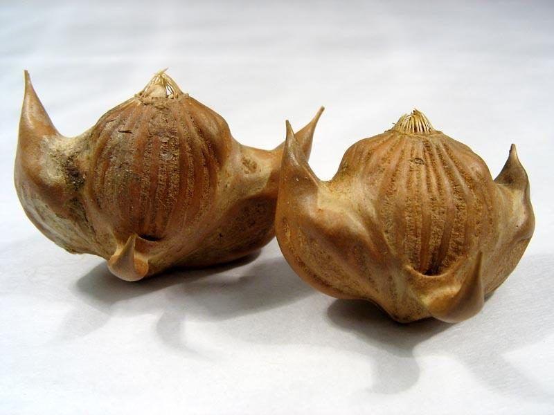 Водяной орех (чилим) - полезные свойства и ...