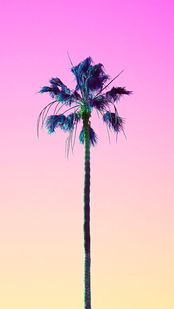 Matt Crump Hipster BackgroundMinimalist PhotographyWallpapers IpadCandy ColorsPalm TreesVisual