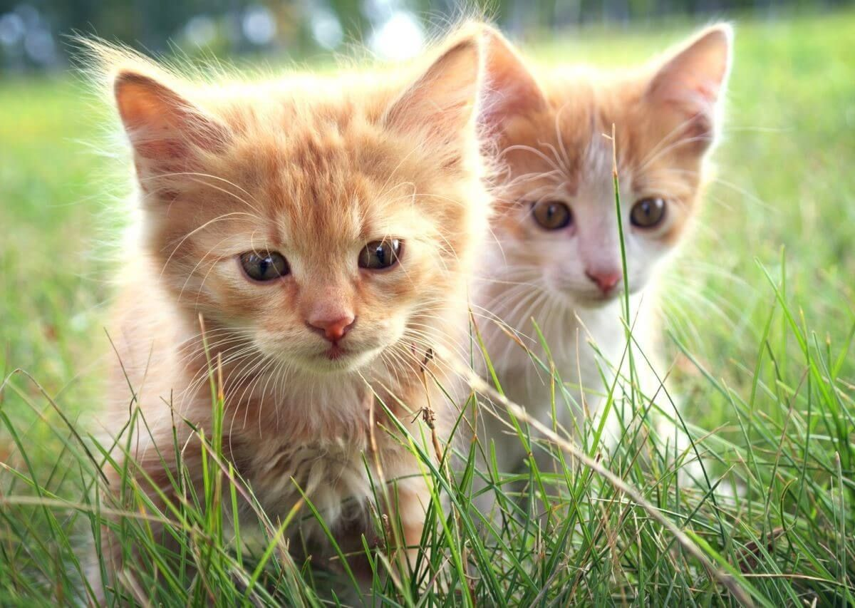 Beware Of Symptoms Of Worms In Cats (With images) Cats