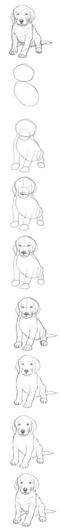 Pics pictures of puppy to draw step by