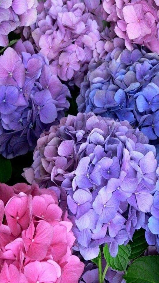 Pin By Tammy Marie On Flowers Pinterest Blumen Garten And