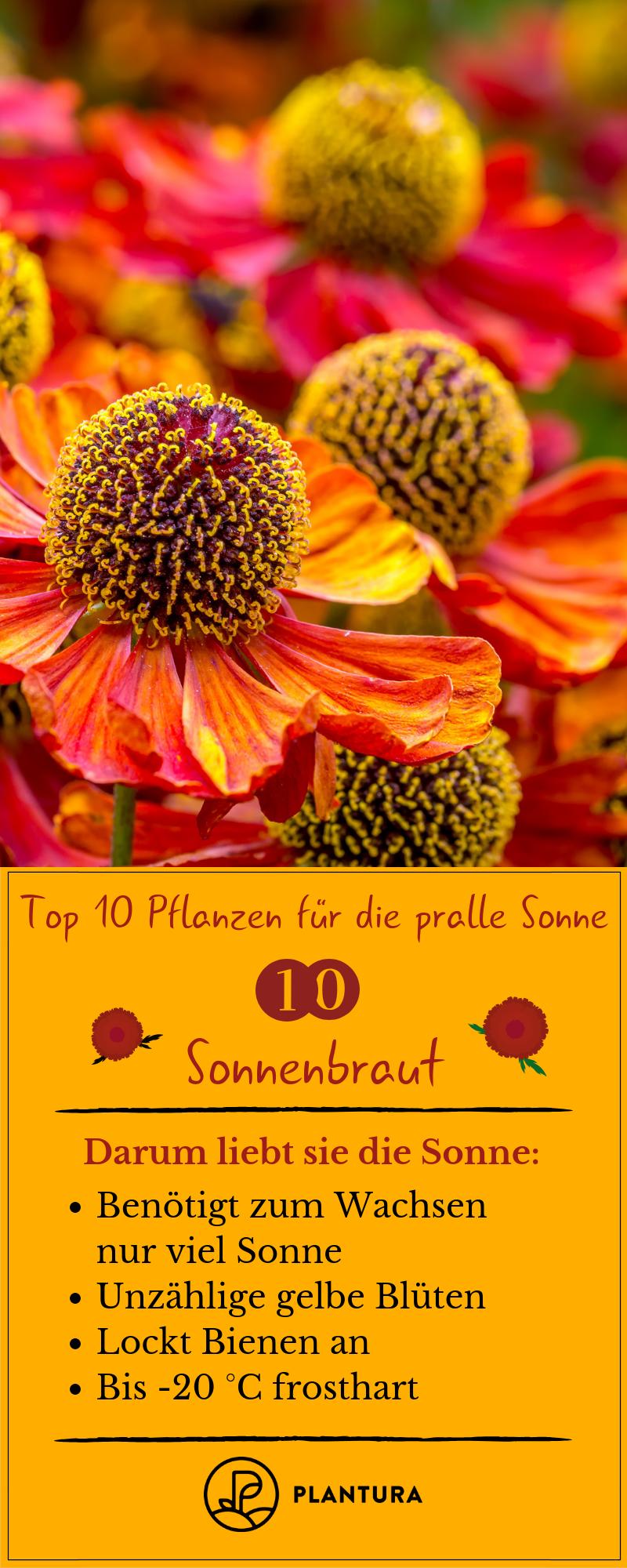 Pflanzen Fur Die Pralle Sonne Die Top 10 Fur Garten