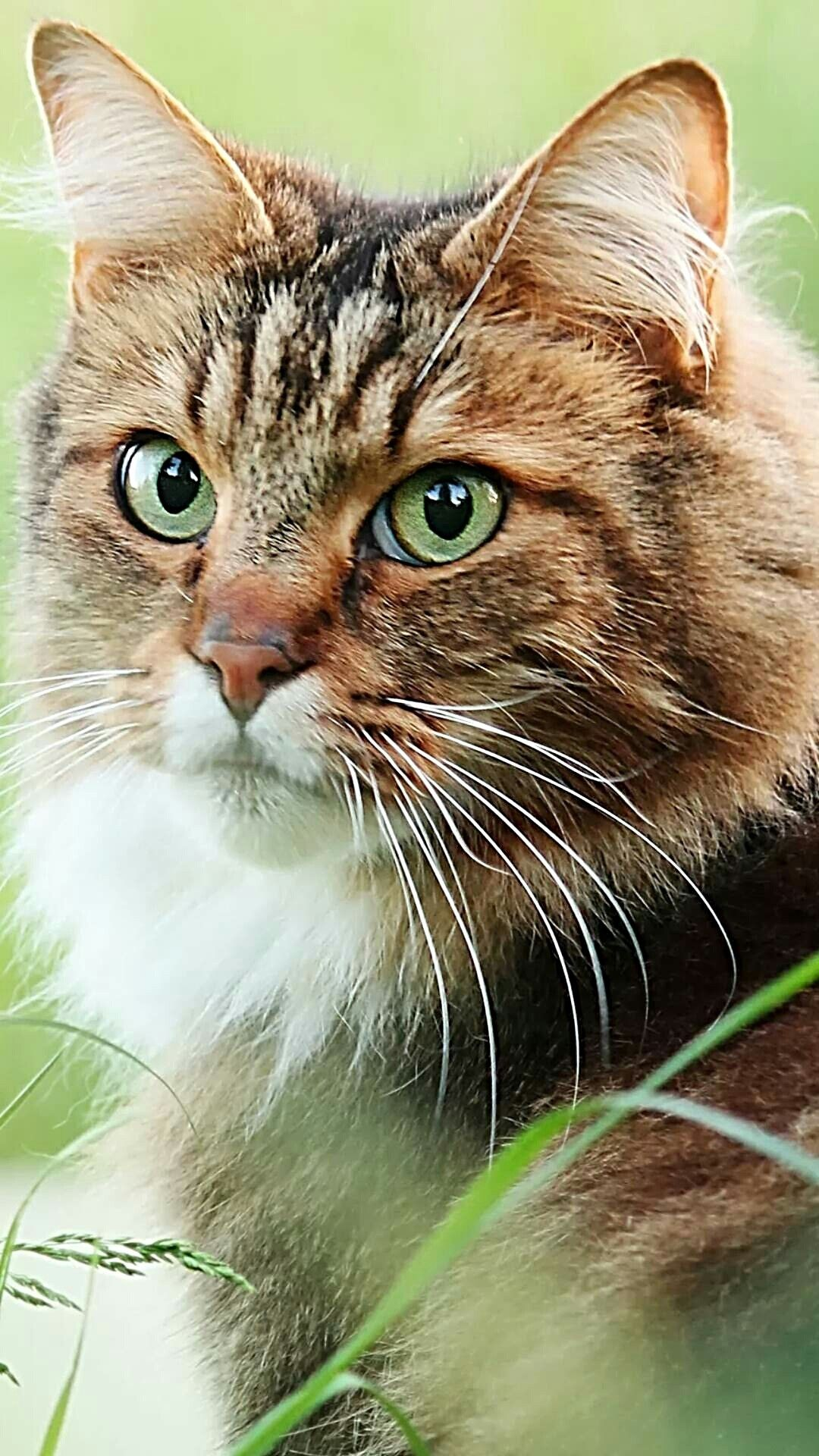 Pin By Gretchen Alessi On Animals Beautiful Cats Cute Cats Pretty Cats