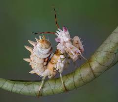 Resultado de imagen de mantis