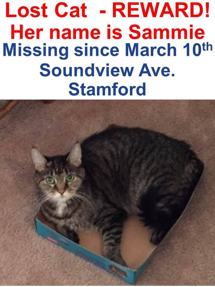 Please Share Lost Cat Contact Stamford Animal Control Center Lost Cat Cats Animal Control