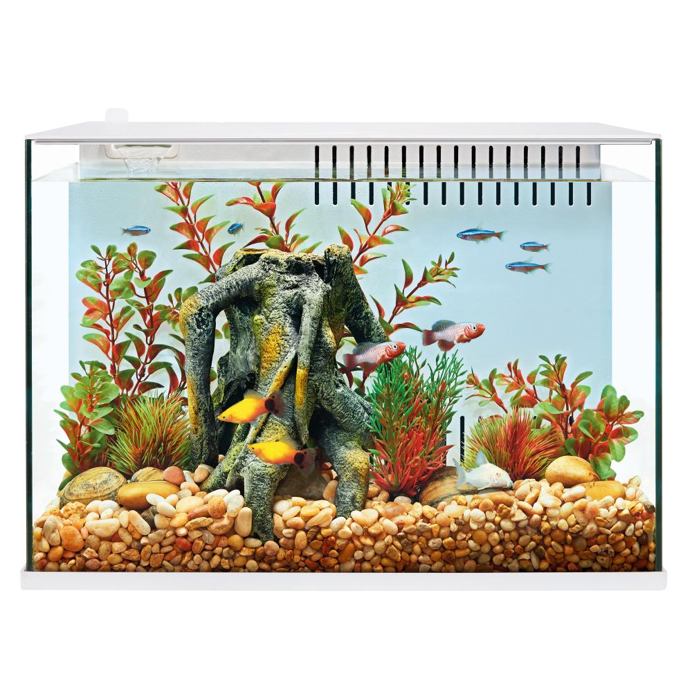 Top Fin Engage 5 Gallon Aquarium In 2020 5 Gallon Aquarium Pet Spray Aquarium