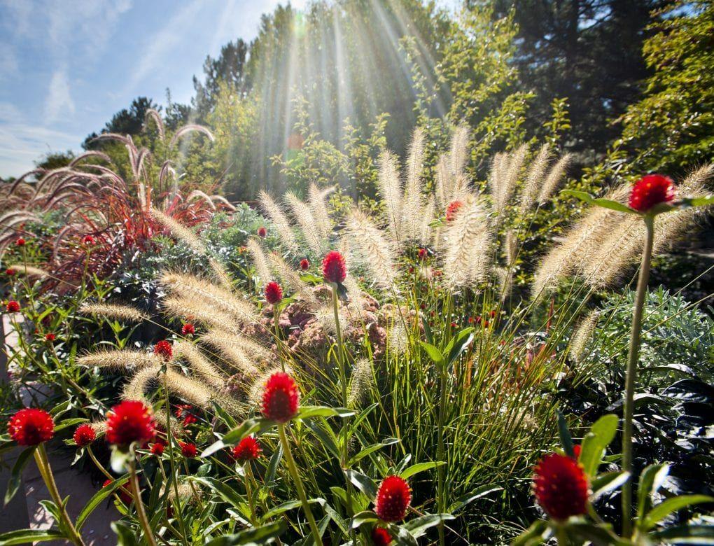 b605b1a39f37642f8cfdb9a1c3dc754d - Denver Botanic Gardens Plains Conservation Center