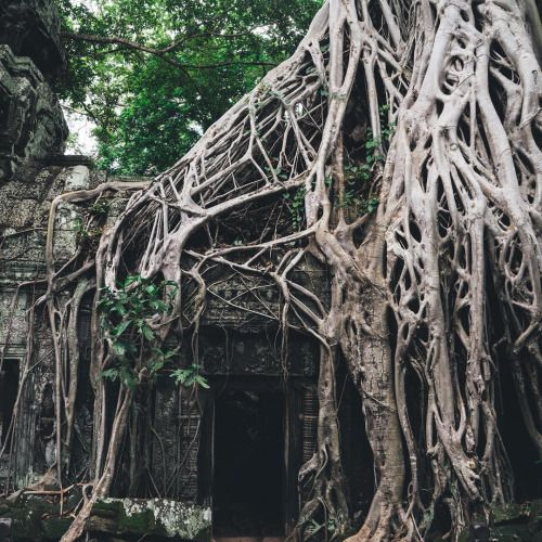 """opticcultvre: """"  hirozzzz ~ The Roots of Angkor #TaProhm  @Dfsofficial #givejoy #TGalleria """""""