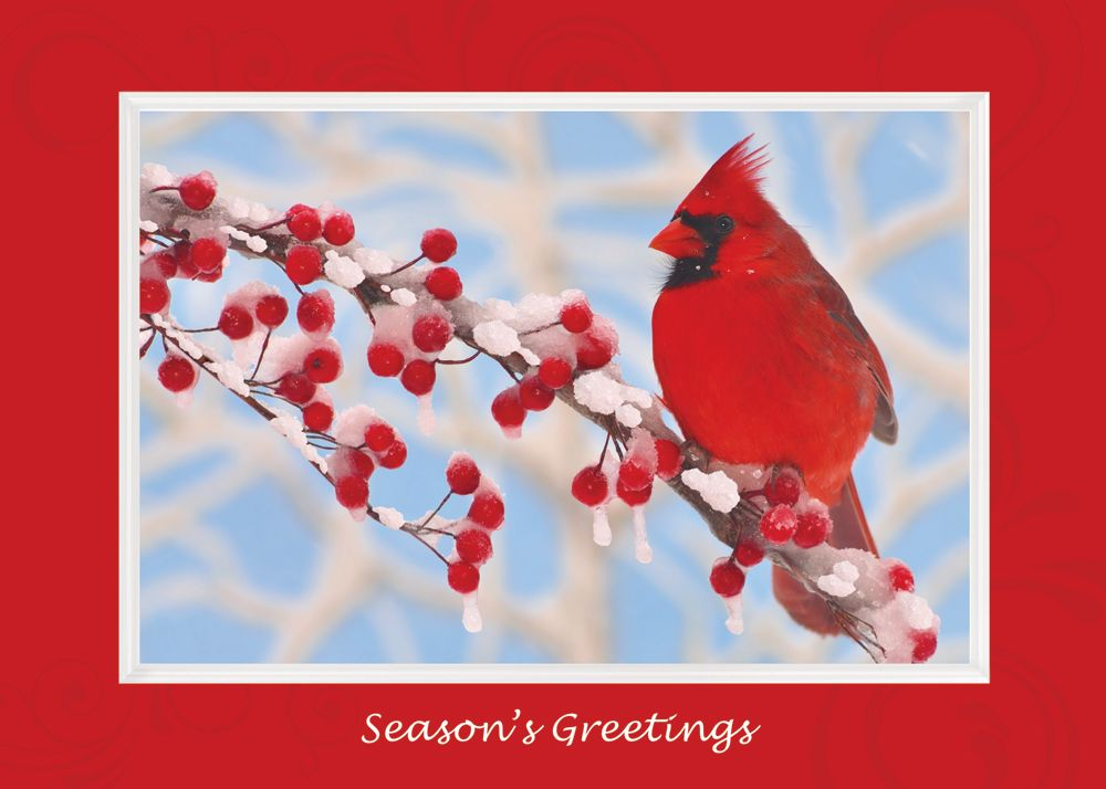Winter Cardinal Holiday Greeting Card - Discount Greeting Cards ...