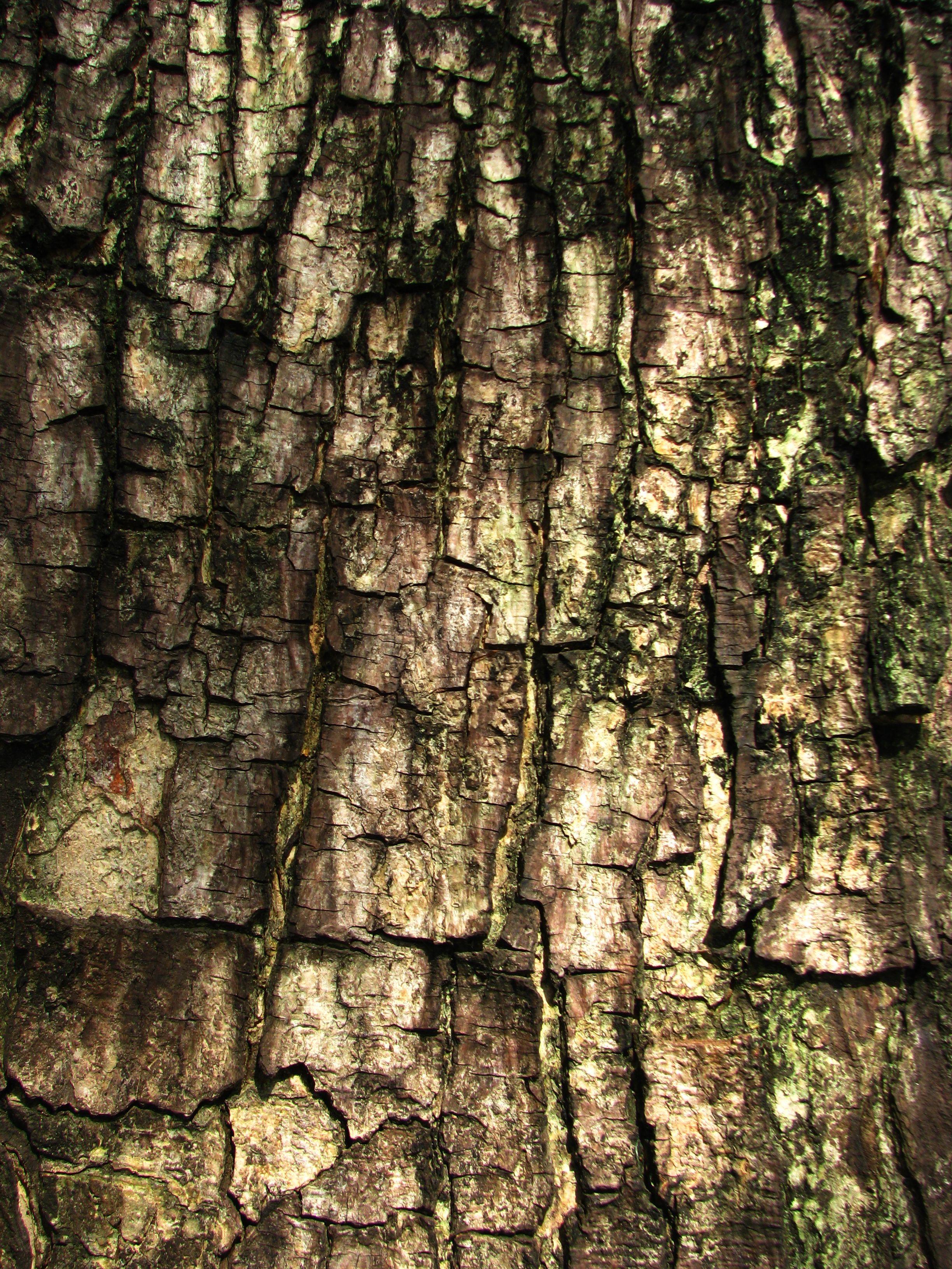 tree bark texture texture pinterest tree bark and