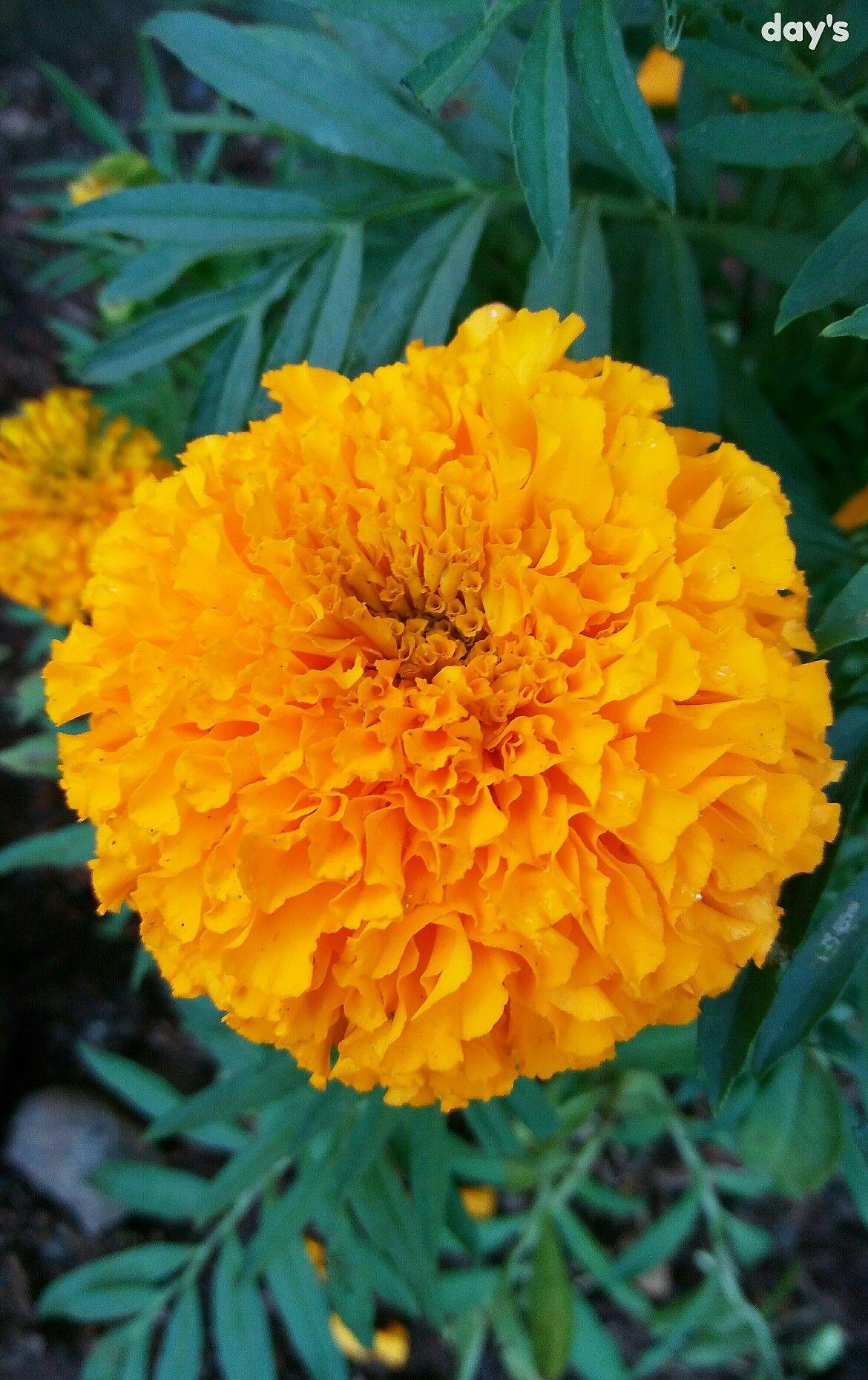 Pin Oleh Enday Ang Di Flower
