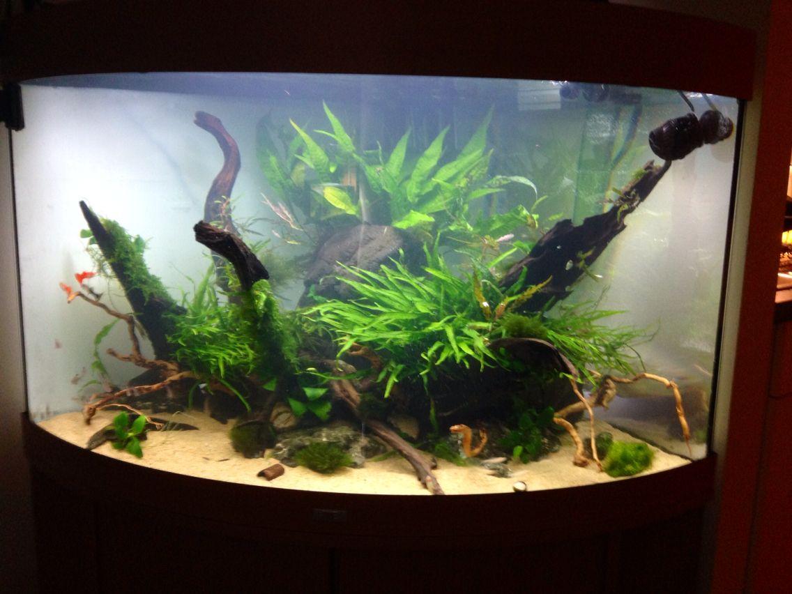 new project juwel trigon 190 idea 1 interieur aquaria pinterest. Black Bedroom Furniture Sets. Home Design Ideas