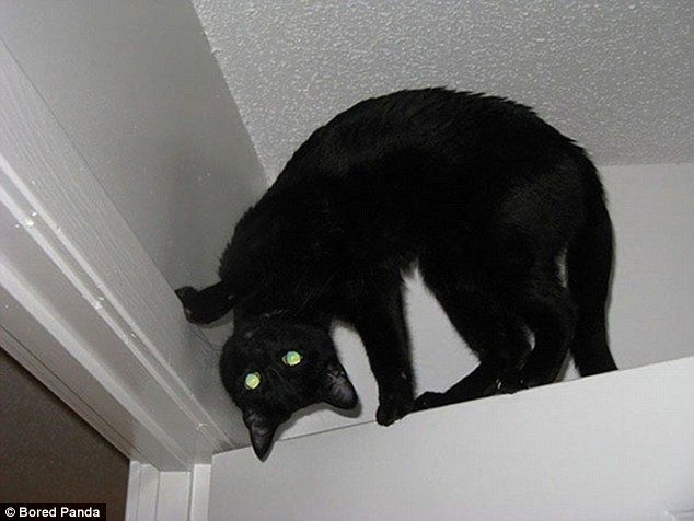 Cat's terrifying! Frightened owners share photos of their demonic pets