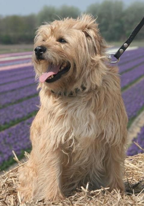 Fotoalbums Dog Quiz Dog Gate Dogs