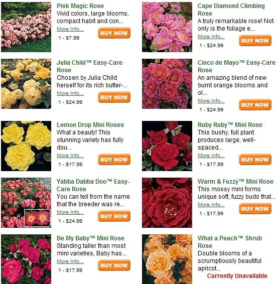 Pictures Flowers Meaning Google Search