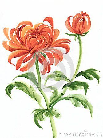 Pix For Chrysanthemum Painting Chrysanthemum Painting Chrysanthemum Flower Drawing Chrysanthemum Watercolor
