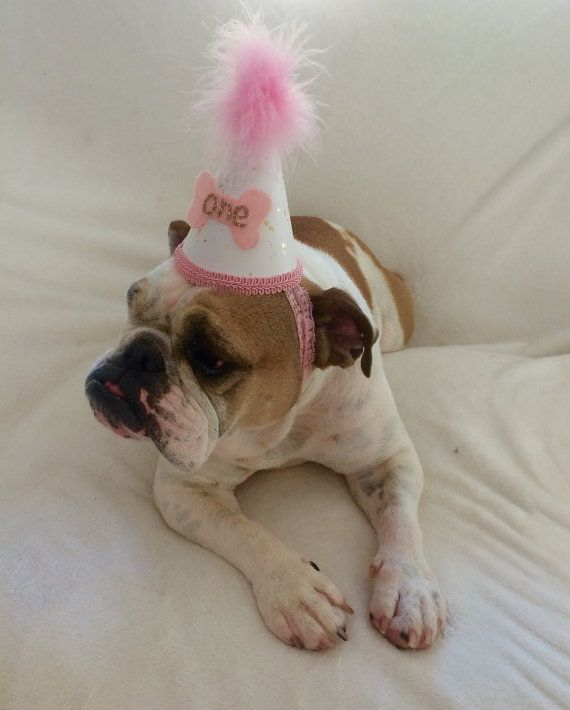 Mini Birthday Hat First Dogs By Babyyourbabyboutique